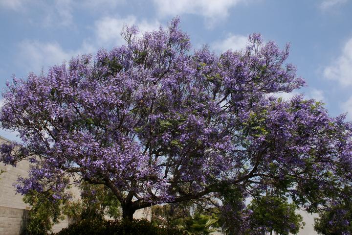 Purple Prompts Hope